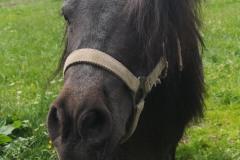GA_Pony1